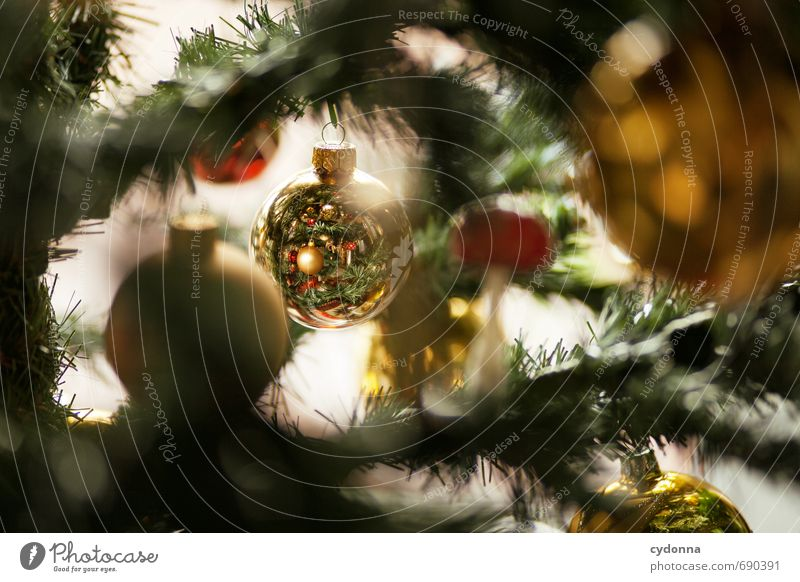 Alle Jahre wieder Weihnachten & Advent Baum Feste & Feiern gold Neugier geheimnisvoll Kitsch Wunsch Suche entdecken Tradition Weihnachtsbaum Schmuck Inspiration