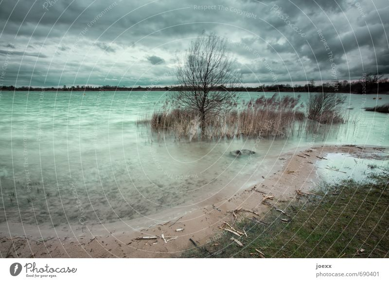 Aussicht für die kommenden Tage. Himmel Natur Pflanze grün Landschaft Wolken kalt grau braun Horizont Luft Wind Seeufer Schilfrohr schlechtes Wetter Baggersee