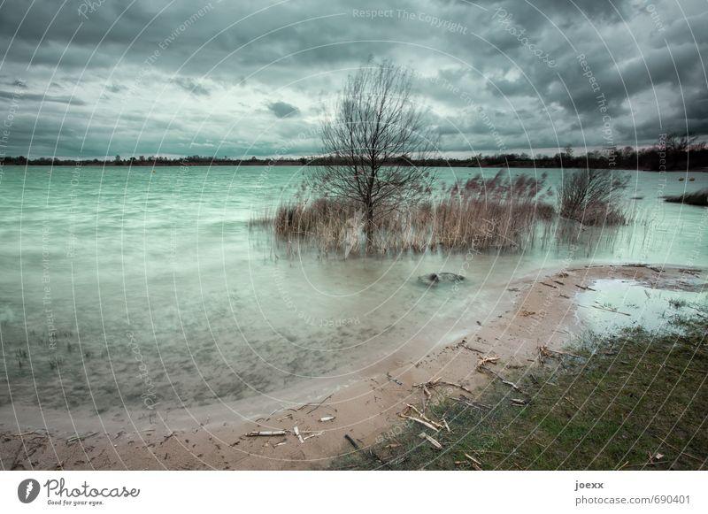 Aussicht für die kommenden Tage. Natur Landschaft Luft Himmel Wolken schlechtes Wetter Wind Pflanze Seeufer kalt braun grau grün Horizont Baggersee Treibholz