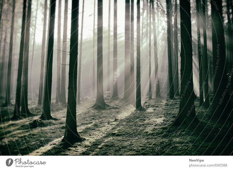 Morgens im Wald Leben harmonisch Wohlgefühl Zufriedenheit ruhig Meditation Fitness Sport-Training Umwelt Natur Landschaft Pflanze Erde Klima Baum Moos