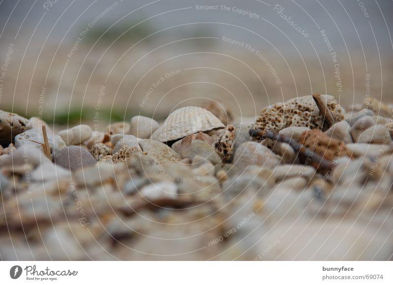 am strand Muschel Strand grau Meer Kies Kieselsteine Steinstrand Kroatien Trogir Einsamkeit Ferien & Urlaub & Reisen Wasser Adria Suche verstecken dazwischen