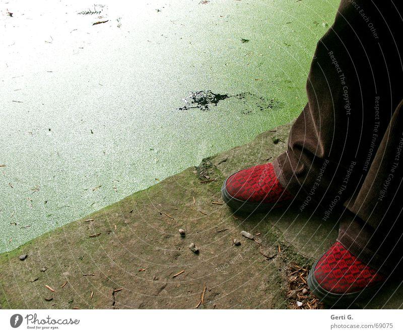 nah am Wasser Mensch Wasser grün rot Küste Stein braun Schuhe stehen Am Rand Teich Wasseroberfläche Transporter Lieferwagen schmuddelig Wasserlinsen