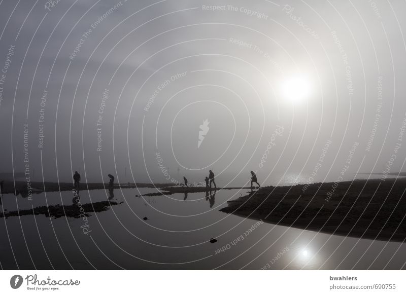 Nebel-Wanderer Mensch 6 Menschengruppe Natur Landschaft Wasser Winter Küste Seeufer Bodensee bedrohlich grau schwarz silber Insel Gedeckte Farben Außenaufnahme