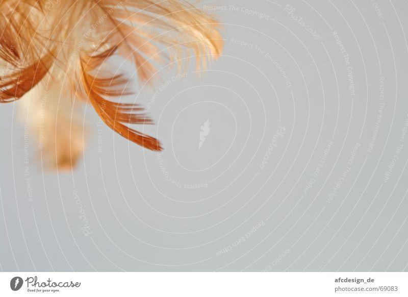 Dream on Himmel Bewegung träumen Vogel Feder
