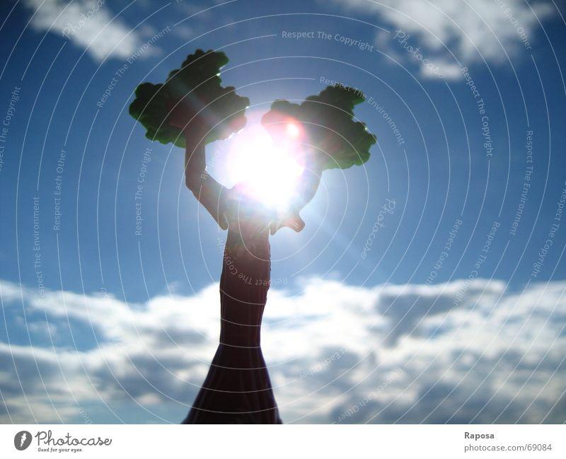 Was den Himmel erhellt weiß Baum Sonne blau Wolken Hintergrundbild Wetter Schokolade Blauer Himmel Kumulus Stratokumulus