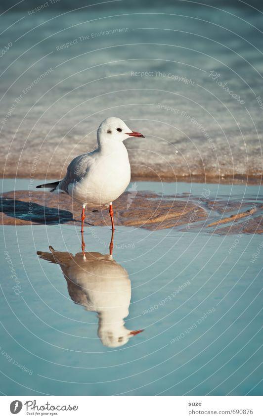 Hm, total versalzen hier ruhig Meer Winter Schnee Umwelt Natur Tier Wasser Klima Schönes Wetter Eis Frost Küste Ostsee Wildtier Vogel 1 stehen warten kalt klein
