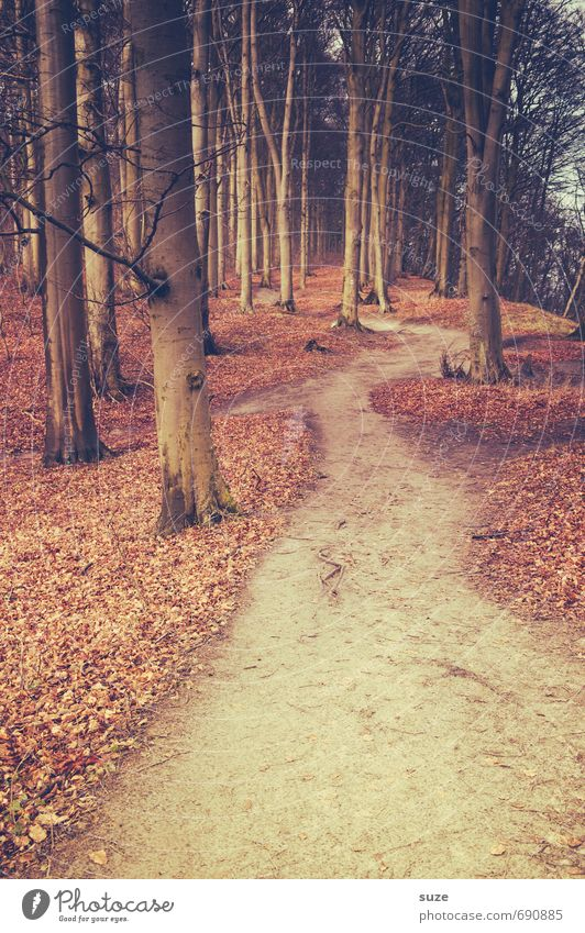 Über den alten Pfad Umwelt Natur Landschaft Pflanze Erde Herbst Baum Park Wald Wege & Pfade Wachstum fantastisch groß hoch natürlich Einsamkeit geheimnisvoll