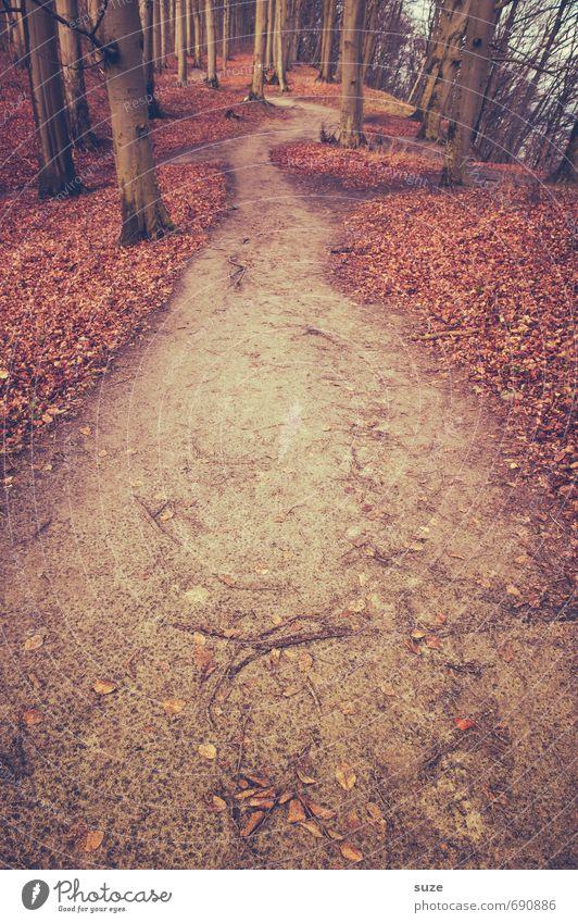 Das ist der Richtige. Umwelt Natur Landschaft Pflanze Erde Herbst Baum Park Wald Wege & Pfade Wachstum fantastisch groß hoch natürlich Einsamkeit geheimnisvoll