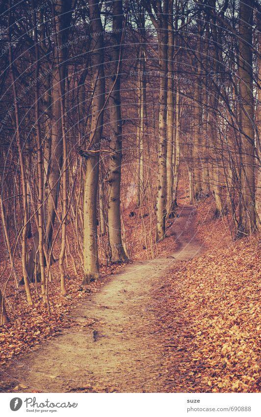 Durch den Wald Umwelt Natur Landschaft Pflanze Erde Herbst Baum Park Wege & Pfade Wachstum fantastisch groß hoch natürlich geheimnisvoll Idylle Ziel herbstlich