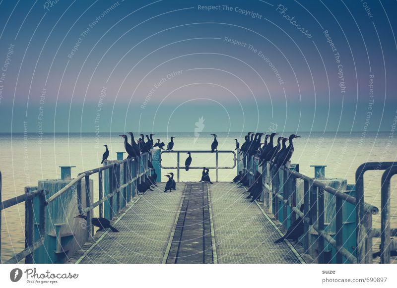 So komme, was da kommen mag ... Umwelt Natur Tier Luft Wasser Himmel Horizont Küste Ostsee Meer Wildtier Vogel Tiergruppe sitzen warten dunkel fantastisch kalt