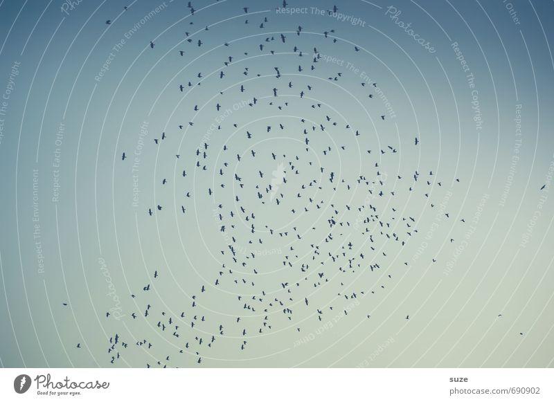 Viel Lärm um nichts Himmel Natur blau Tier Umwelt Bewegung außergewöhnlich Stimmung Hintergrundbild fliegen Vogel Luft wild Wildtier fantastisch geheimnisvoll