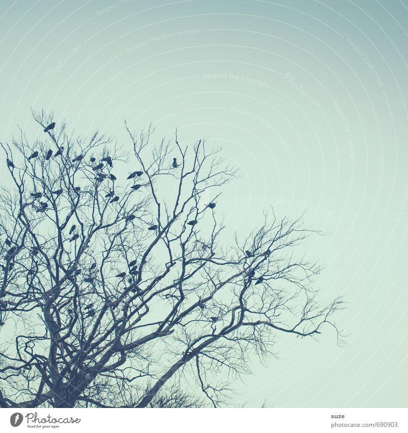 Starbesetzung Himmel Natur blau Baum ruhig Tier Winter Umwelt Stimmung Vogel wild Luft Wildtier warten fantastisch Ast