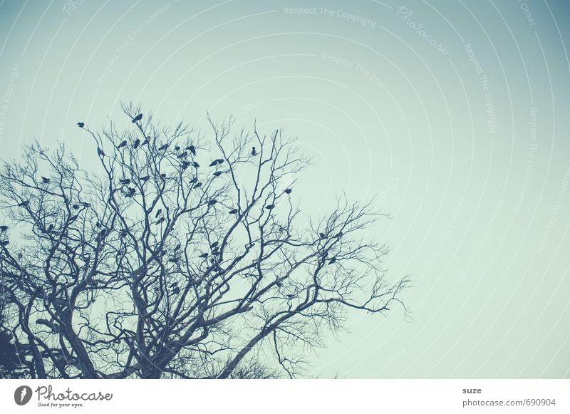Alle da - dann können wir ja anfangen Himmel Natur blau Baum Einsamkeit ruhig Tier Winter kalt Umwelt Stimmung Vogel wild Luft Wildtier warten