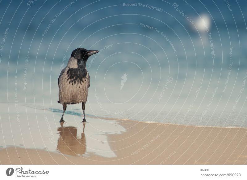 Einzelgänger | wär so gern ne Möwe Natur blau Wasser Meer ruhig Tier Strand kalt Umwelt Küste grau natürlich außergewöhnlich Vogel Wetter Wildtier