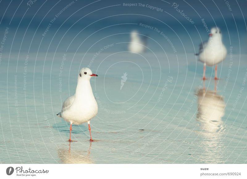 Jonathan und lauter Wasser ruhig Sommer Sommerurlaub Meer Umwelt Natur Tier Klima Schönes Wetter Küste Ostsee Wildtier Vogel 3 stehen warten kalt klein