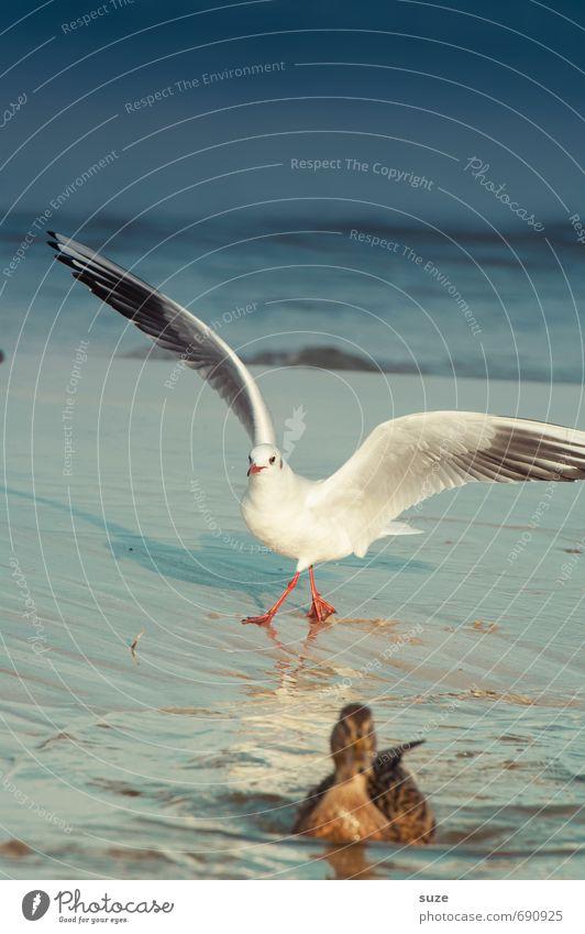 Entenjagd Schwimmen & Baden Meer Umwelt Natur Tier Wasser Himmel Horizont Klima Wetter Küste Ostsee Wildtier Vogel Flügel 2 fliegen kalt Neugier wild blau