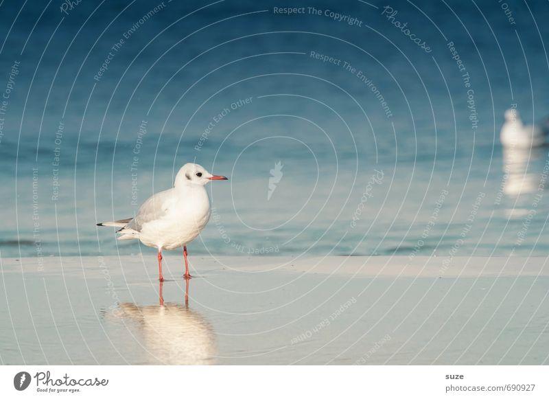 Der kiekt sich de Oogen aus'n Kopp ... ruhig Sommer Sommerurlaub Umwelt Natur Tier Wasser Klima Küste Ostsee Meer Wildtier Vogel stehen warten kalt klein