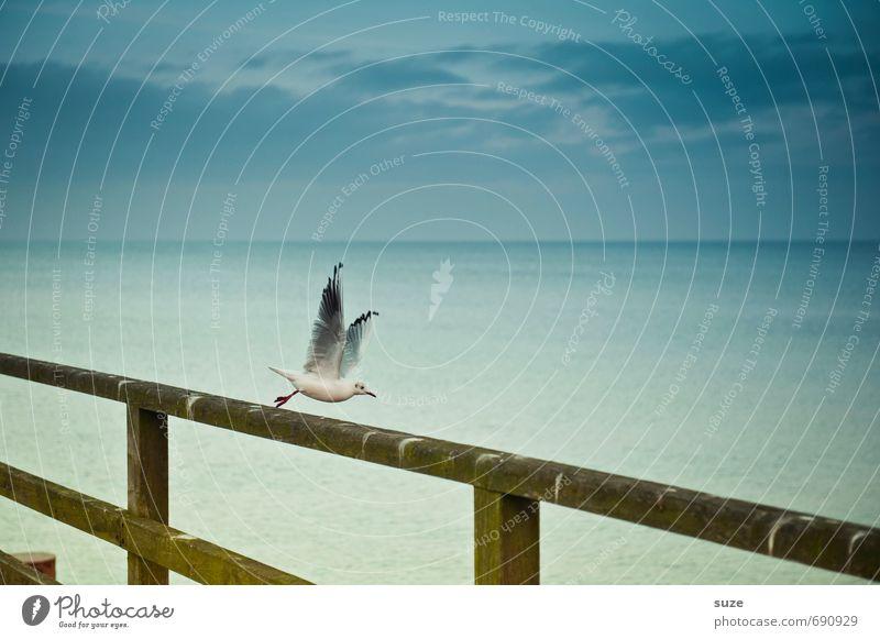 Jetzt mal Butter bei die Fische! Freiheit Natur Tier Luft Himmel Küste Ostsee Meer Wildtier Vogel Flügel Bewegung fliegen authentisch fantastisch kalt klein
