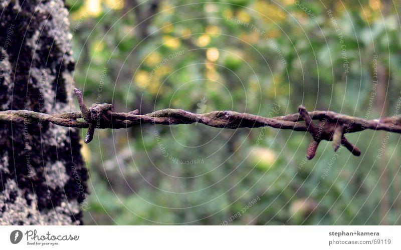 // Stein & Stacheldraht alt Baum grün blau rot grau Metall braun Angst gefährlich Apfel Spitze Stahl Rost Zaun