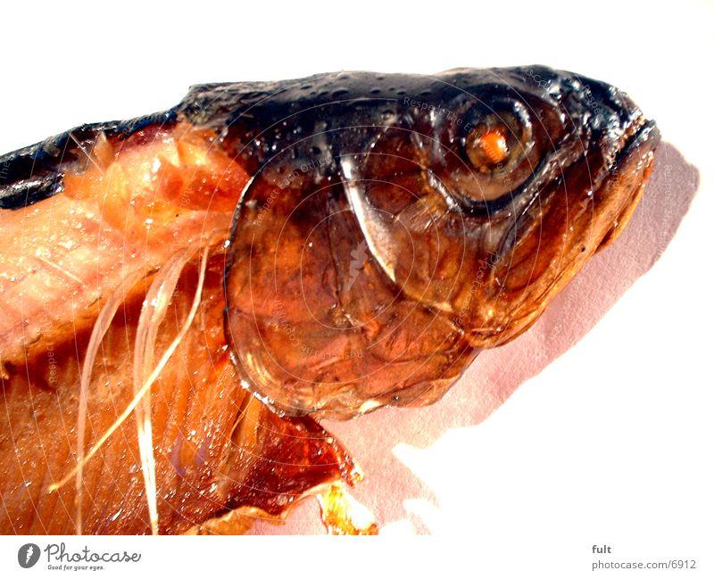 Fisch lecker Ernährung Forelle Scheune