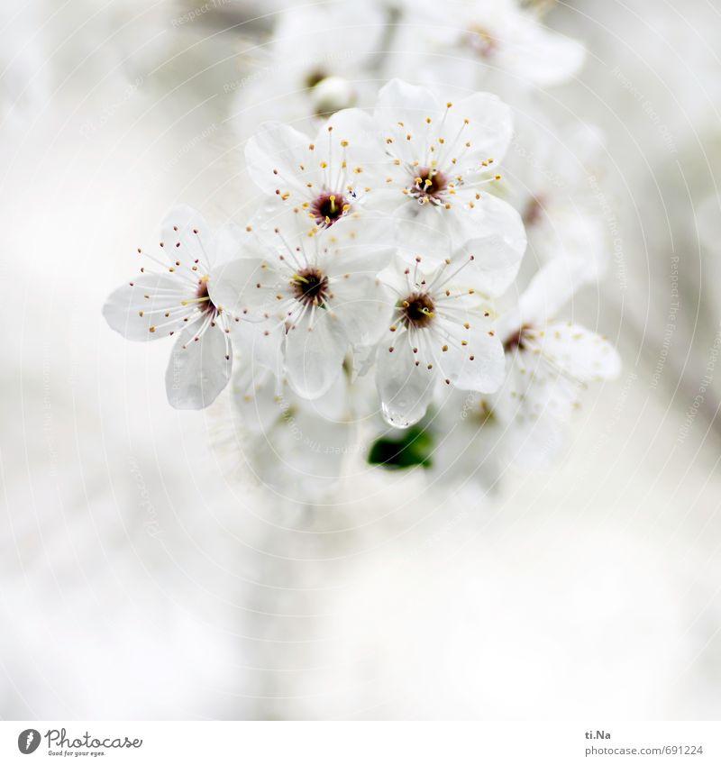 echt | dufte Natur Stadt schön grün weiß Pflanze Baum Landschaft gelb Frühling Blüte grau hell Garten Park Sträucher
