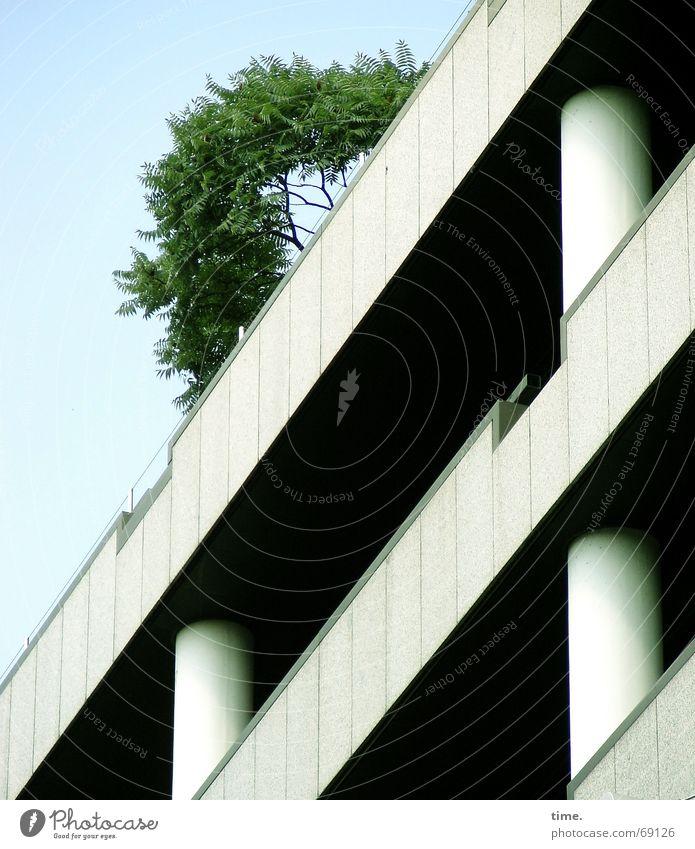 Alibi der Großstadt Baum Erfolg Beton Hochhaus hoch Dachgarten