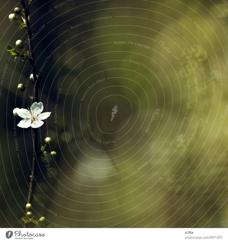 Blütenbande Natur schön grün weiß Pflanze Baum Tier gelb Umwelt Frühling klein braun Garten ästhetisch Schönes Wetter