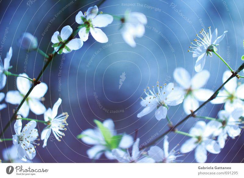 Blumenmeer das zweite Natur Pflanze blau schön weiß Blüte Frühling klein leuchten Ast violett Obstbaum