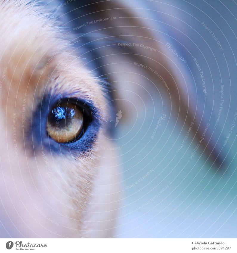 Im Auge des Waldes Haustier Hund 1 Tier wild weich Hundeauge Reflexion & Spiegelung Makroaufnahme Nahaufnahme blau Farbfoto Außenaufnahme Schwache Tiefenschärfe