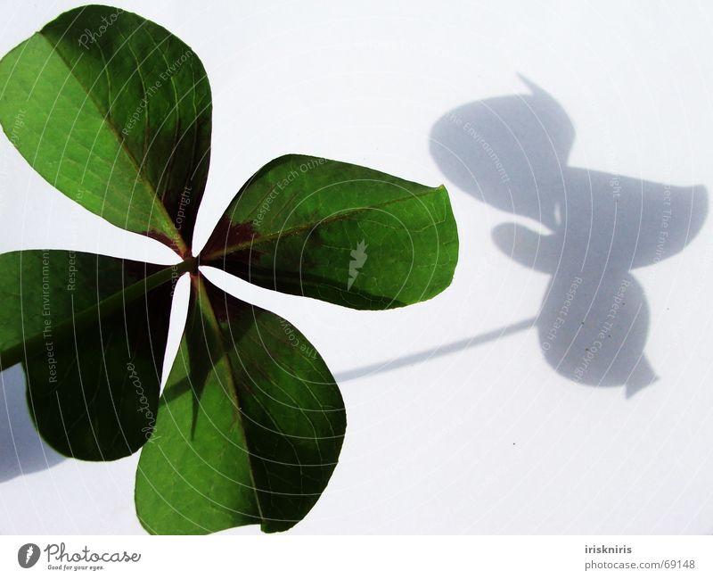 Glück gefunden Klee grün Japan Zierklee vierblättrig Symbole & Metaphern Wunsch 4blättrig Schatten Nahaufnahme herzform Strukturen & Formen