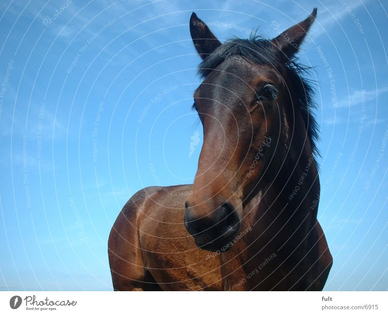 Pferd Himmel blau Ponny