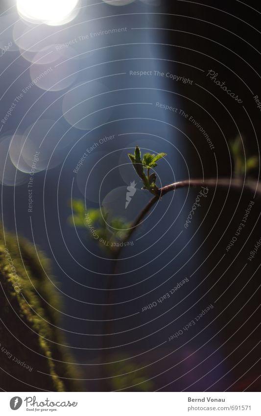 MorgenPillen Bach Bachufer Wasser Schwache Tiefenschärfe Frühling Wachstum blau grün schwarz Gras Moos Wolken Reflexion & Spiegelung Kreis Gegenlicht Sonne Tag