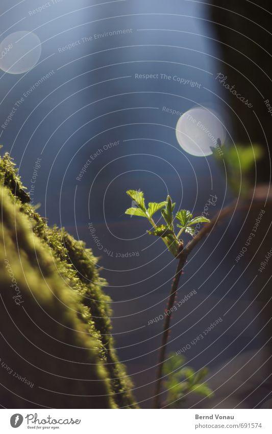 Morgenschimmer Bach Bachufer Wasser Schwache Tiefenschärfe Frühling Wachstum blau grün schwarz Gras Moos Wolken Reflexion & Spiegelung Kreis Gegenlicht Sonne