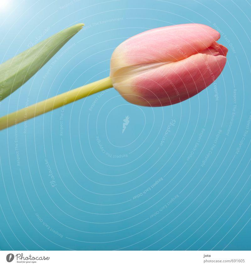 ausschnitt III Natur Pflanze blau schön Sommer Blume ruhig Blüte Frühling rosa frisch Dekoration & Verzierung modern Blühend zart rein