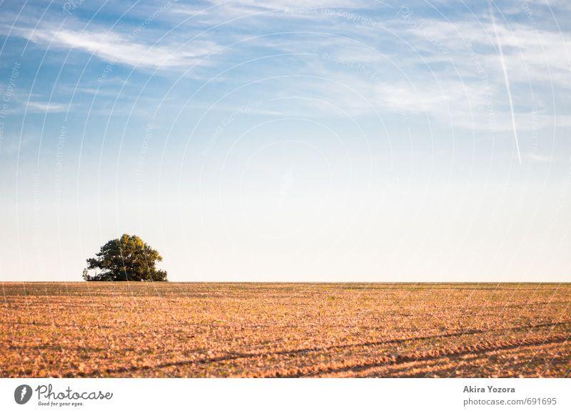 Babisnauer Pappel Himmel Natur Ferien & Urlaub & Reisen blau grün weiß Baum Erholung Landschaft Wolken Herbst natürlich braun orange Zufriedenheit Feld