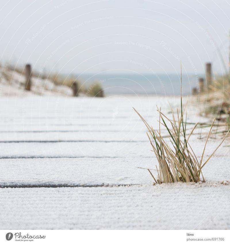 zum Meer Himmel Natur Ferien & Urlaub & Reisen Wasser Einsamkeit Erholung Landschaft Winter Strand Umwelt Küste Gras Sand Zufriedenheit Tourismus
