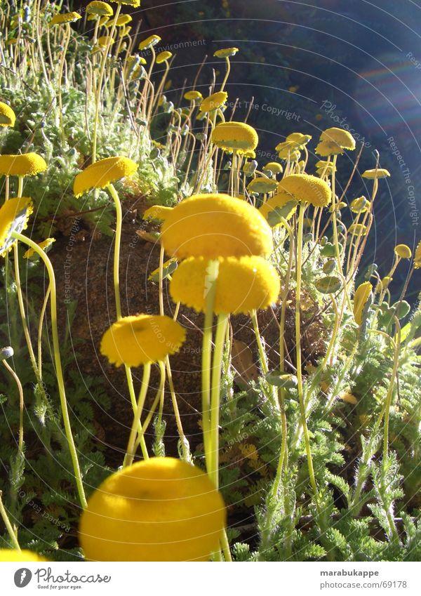 Mars Natur Himmel Blume Regen Erde Weltall Australien Blumenwiese