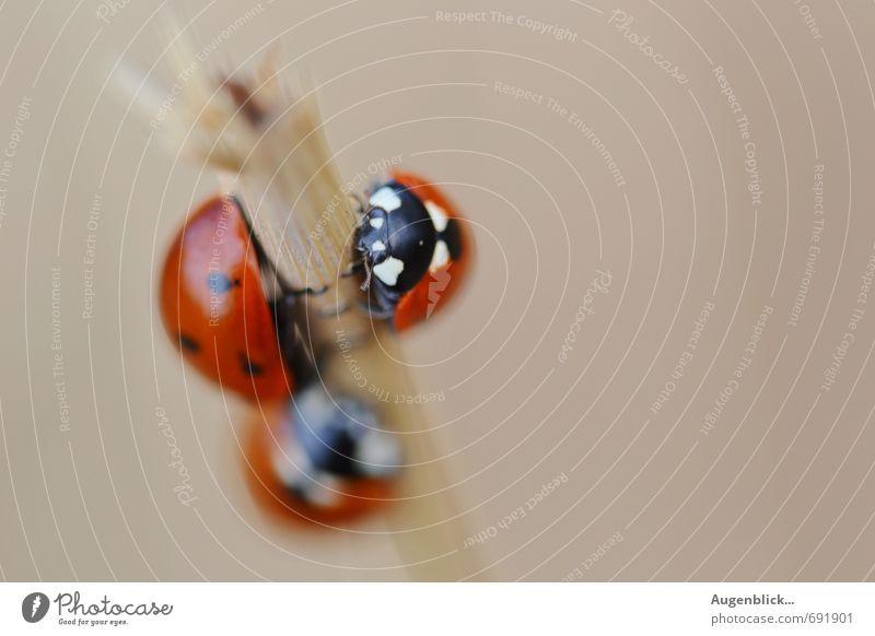 Marienkäferfamilie... Freude Tier Leben Glück Tiergruppe Lebensfreude Geborgenheit Käfer Schwarm Marienkäfer Tierfamilie