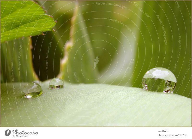 ooh~~O Reflexion & Spiegelung Kugel Wassertropfen Regen Klarheit nass grün Blatt Außenaufnahme tropfenwelt tropfenstraße Natur Garten Verhext Makroaufnahme