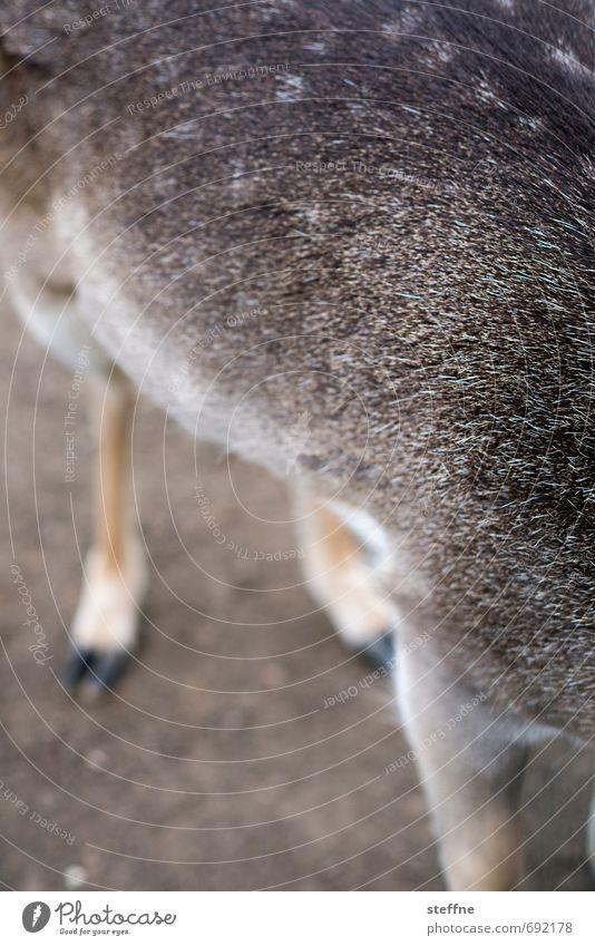 Tierisch gut: Reh außergewöhnlich Wildtier Fell Jagd Schüchternheit Tarnung