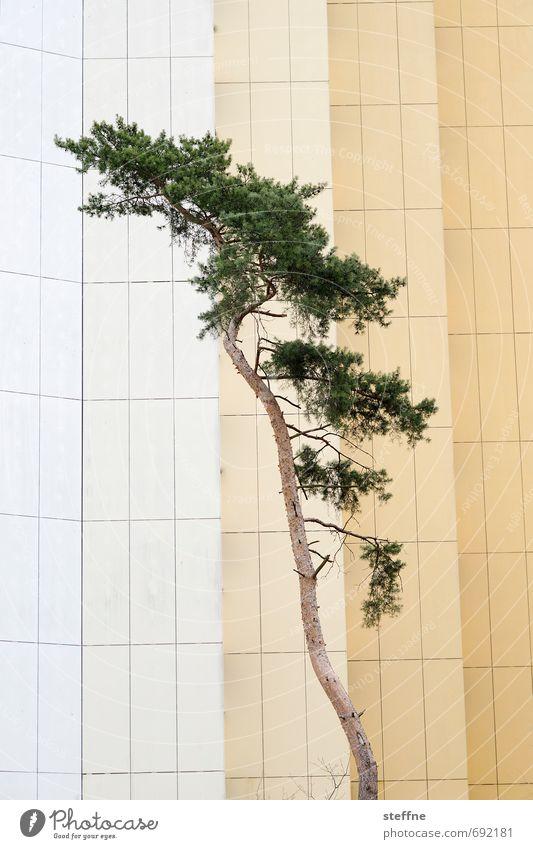 Bäume (1/8) Natur Stadt Baum Wald Umwelt Fassade Wachstum Klima Ast Baumstamm ökologisch Nadelbaum Sauerstoff