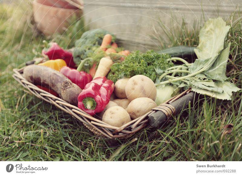 Gemüsetag.... Pflanze Blatt Gesunde Ernährung Blüte Gesundheit Essen Garten Lebensmittel Zufriedenheit lecker Bioprodukte Frühstück Abendessen Picknick