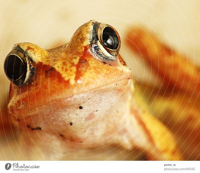 Vermisst jemand nen Märchenprinzen? Natur schön Auge Tier gelb Leben Herbst Umwelt springen orange nass Fröhlichkeit süß Europa niedlich Neugier