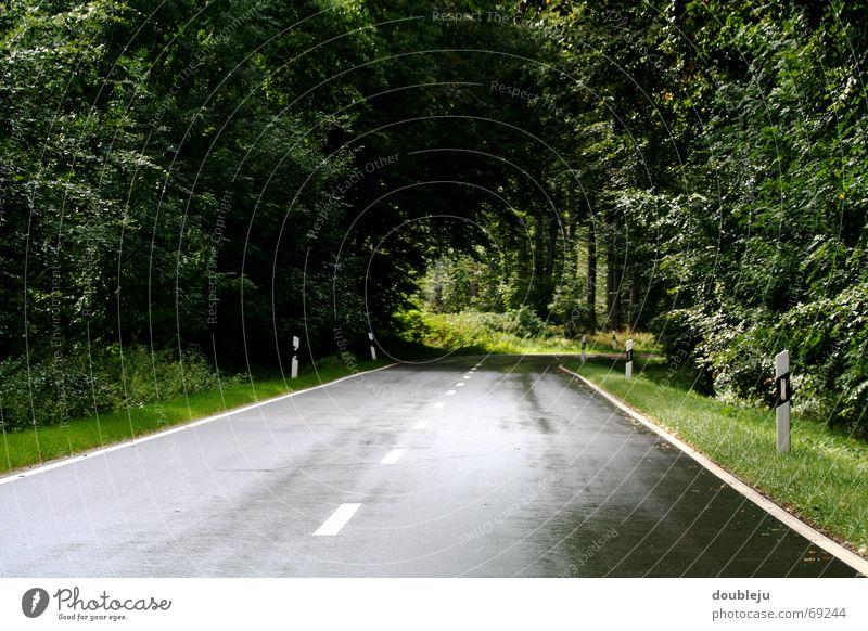 reiseroute feucht Baum Wald Bayern Waldlichtung Tunnel fahren Straße Regen hineinfahren Kurve Linie Biologische Landwirtschaft Natur