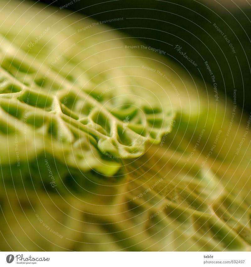 heute jibts Kohlsuppe . . . grün Pflanze Blatt Gesunde Ernährung natürlich Gesundheit Lebensmittel ästhetisch frisch genießen rein Gastronomie Gemüse