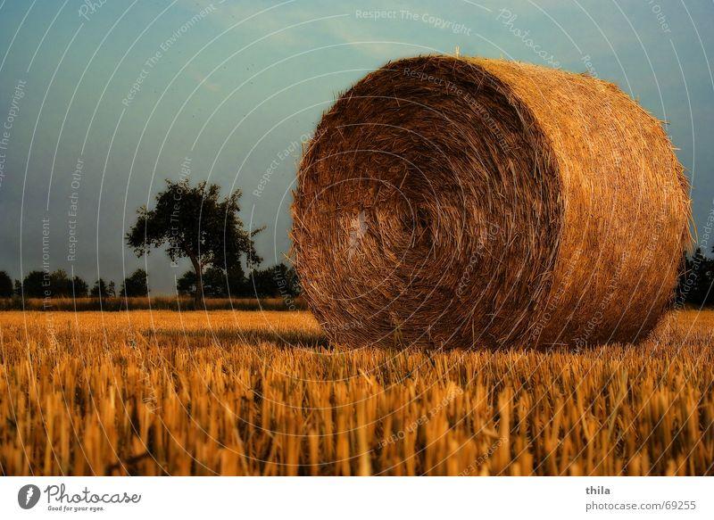 Strohfeuer Ernte Strohballen Feld Stoppelfeld ruhig Erholung Natur