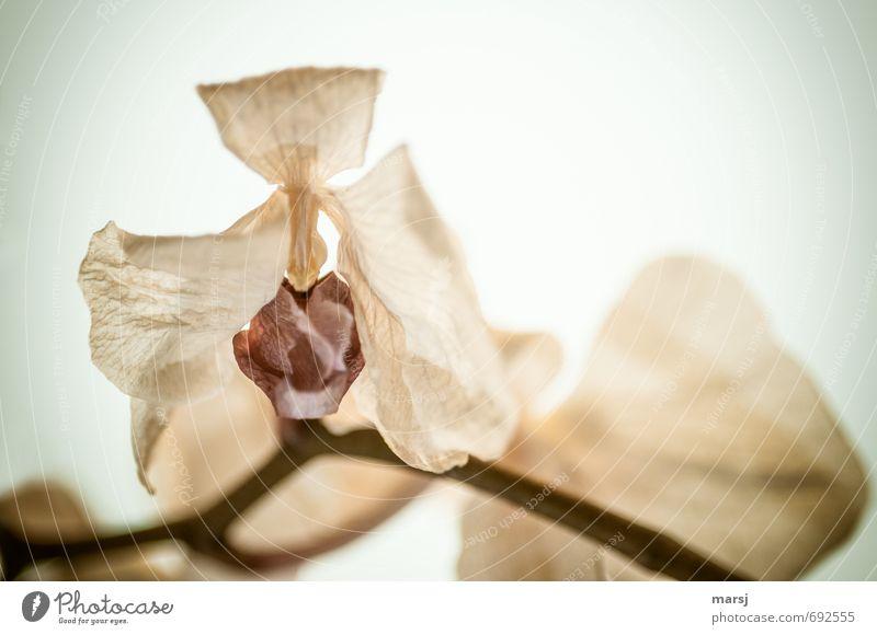 is mir wurscht   dass ich mal eine Schönheit war Natur alt Pflanze Blume dunkel Traurigkeit Tod Blüte Stimmung authentisch Armut kaputt Wandel & Veränderung