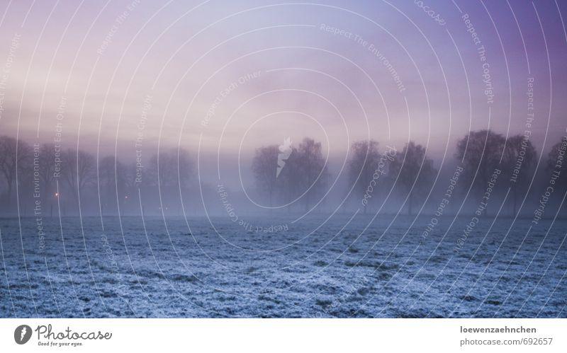 Umnebelt Natur Landschaft Tier Himmel Winter Nebel Schnee Baum Wiese frieren kalt natürlich blau violett rosa Zufriedenheit Gelassenheit geduldig ruhig