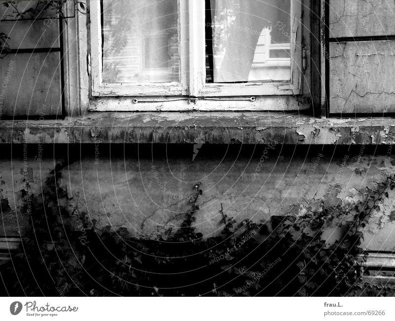 das Haus gegenüber Stadthaus Sims Stadtteil Fenster Reflexion & Spiegelung Baum Fassade Efeu Wohnung Wand alt Wohnzimmer Dinge souterain Charakter