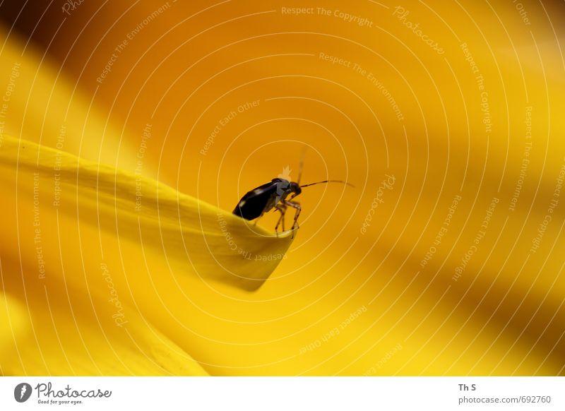 Insekt Natur schön Farbe Pflanze Sommer Tier schwarz gelb Frühling Blüte Freiheit elegant wild Wildtier ästhetisch Blühend